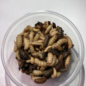 Calci worms pack